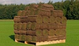 Graszodenkopen - Graszoden Kopen